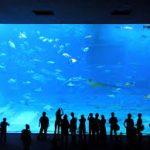 沖縄本島の観光地のおすすめスポットを20選に厳選
