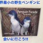 【世界最小の野生ペンギン】フィリップ島のペンギンパレードに感動。